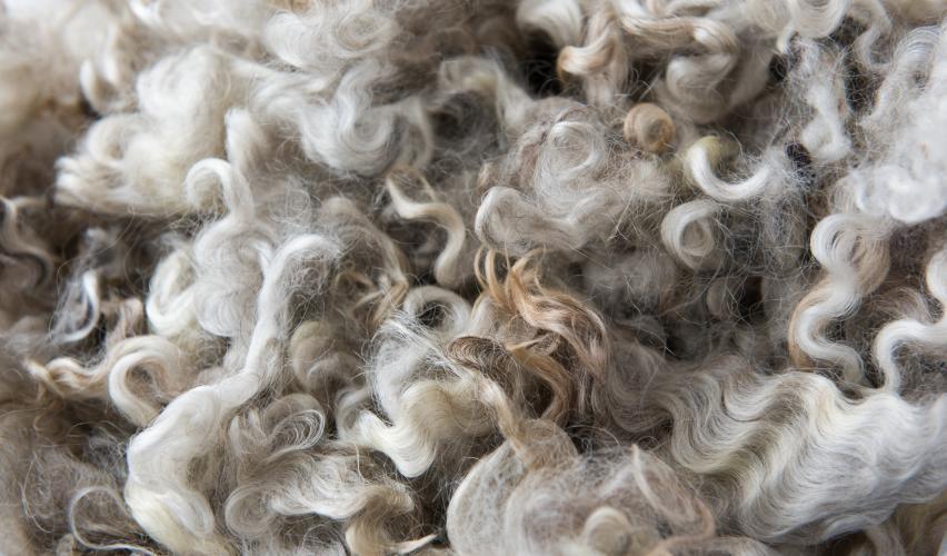 Natural Fibers - Wool
